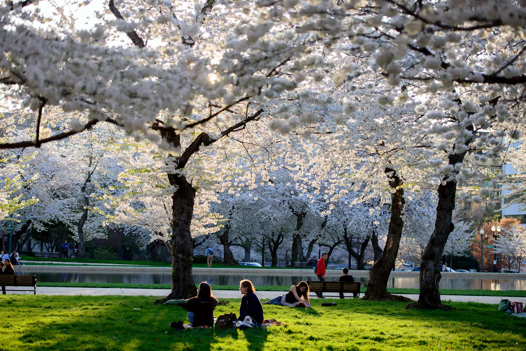 Greenawalt_Lifestyle_Cherry-Blossoms_01