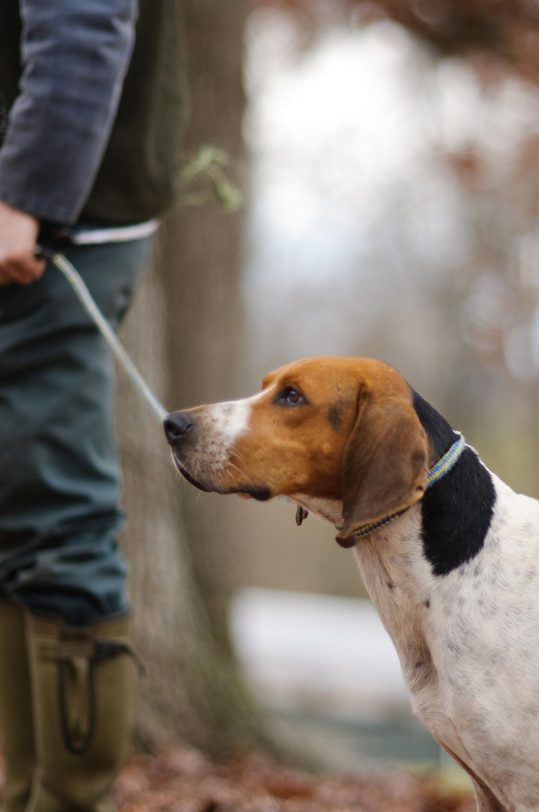 Greenawalt_Lifestyle_hunting-dogs_01